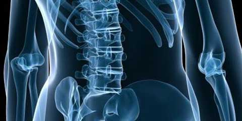 the spine physio